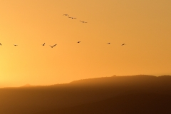Following-The-Sun